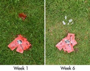 biodegradable delta packaging
